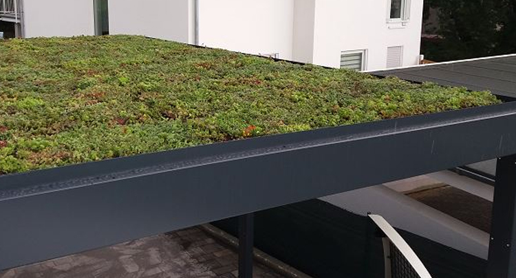 Green Eco Living Roof